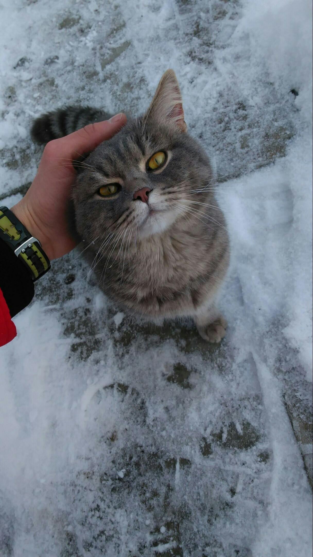 К коту пришел гость
