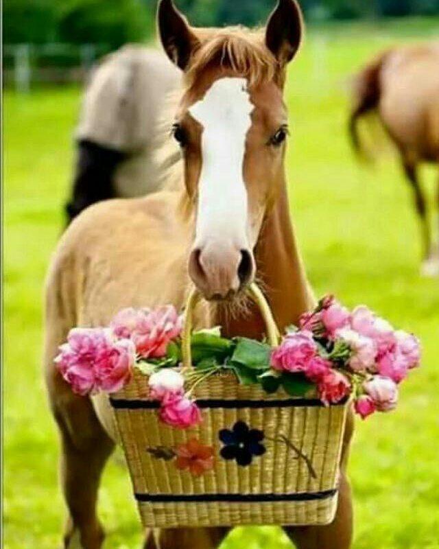 Цветы и лошадь