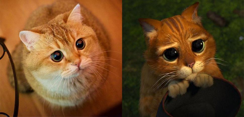 картинки кот в сапогах шрек