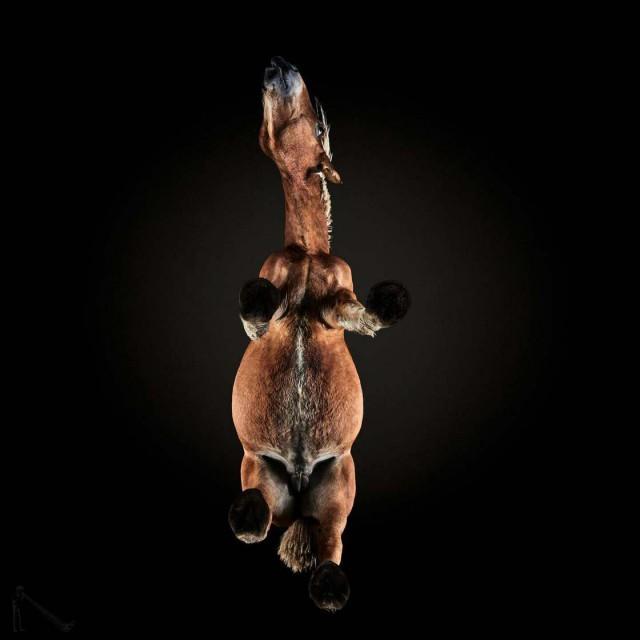 активные кони порно