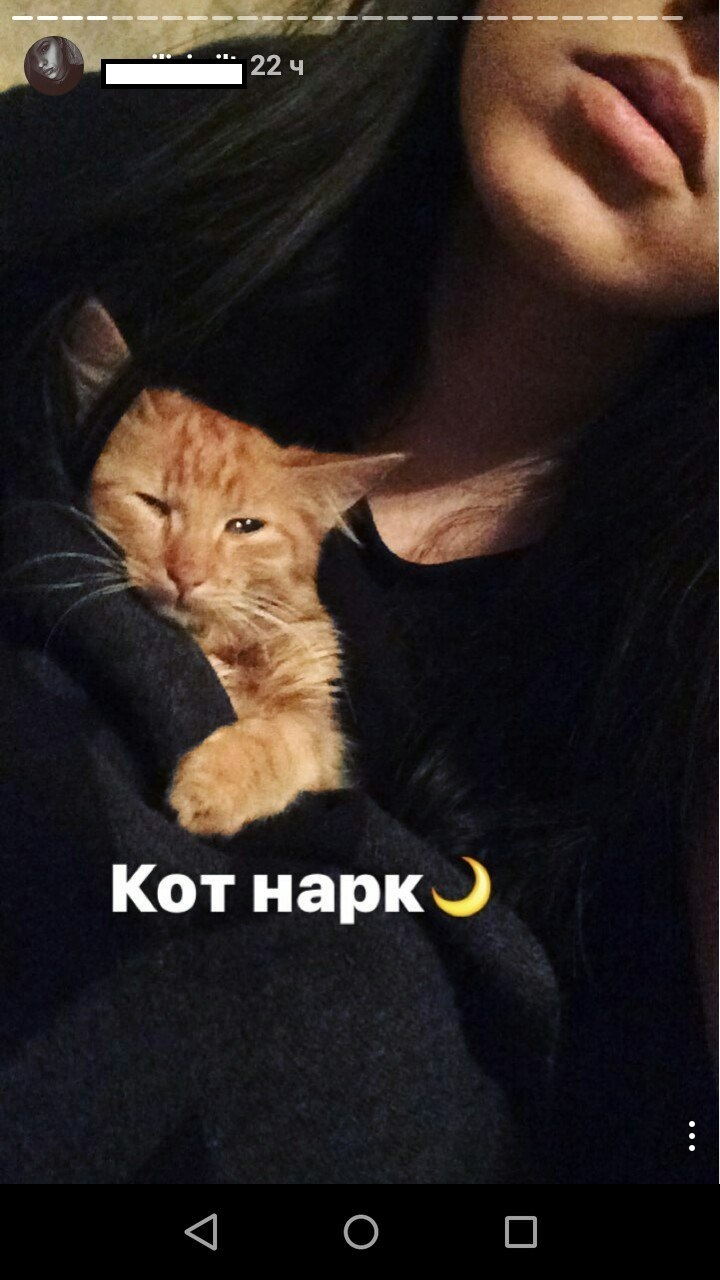 Как кончают коты