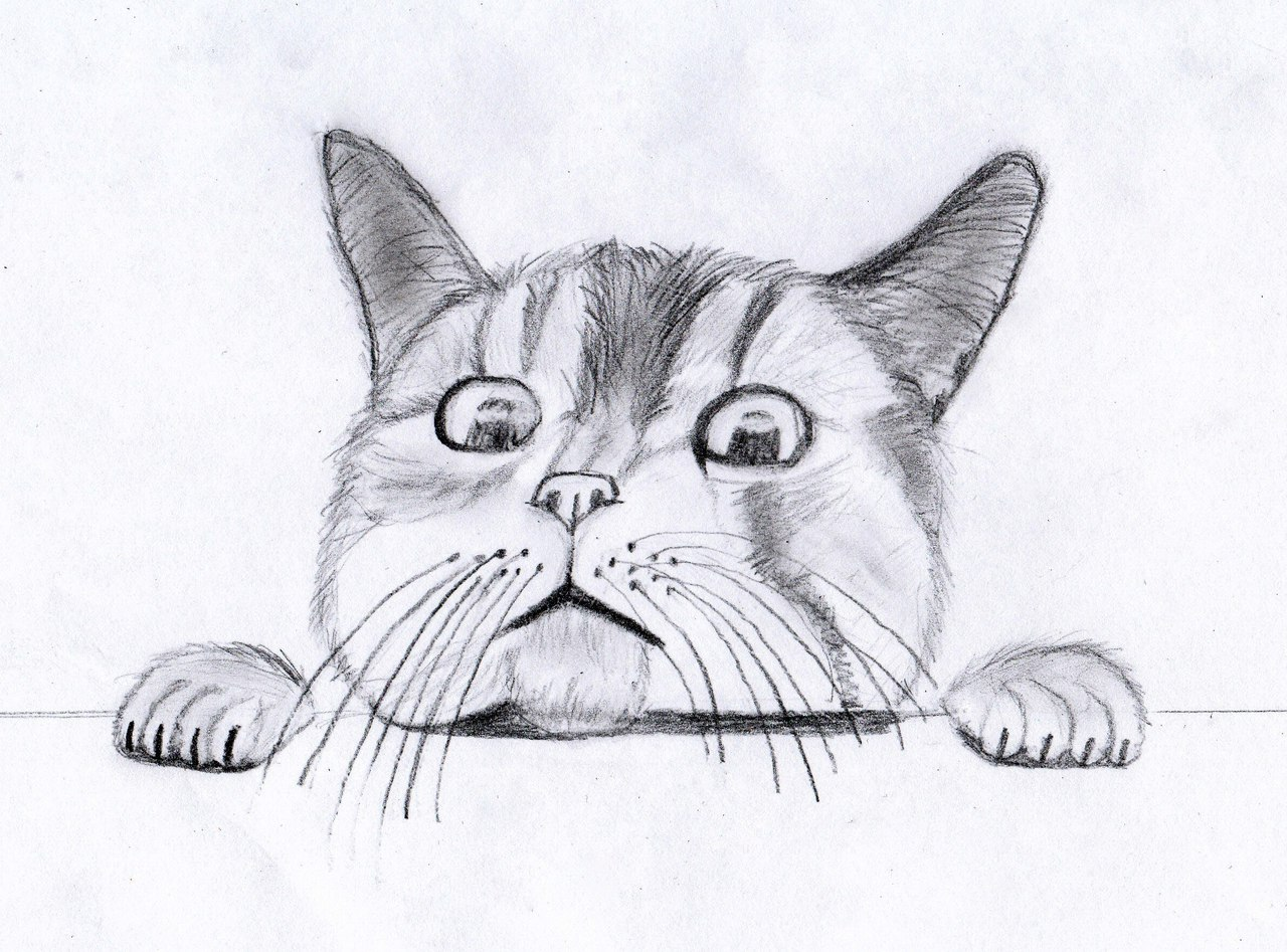 Картинки котов рисунок карандашом