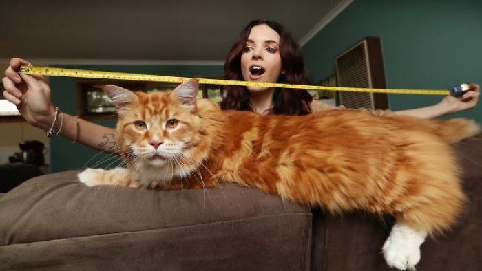 Большие коты в австралии