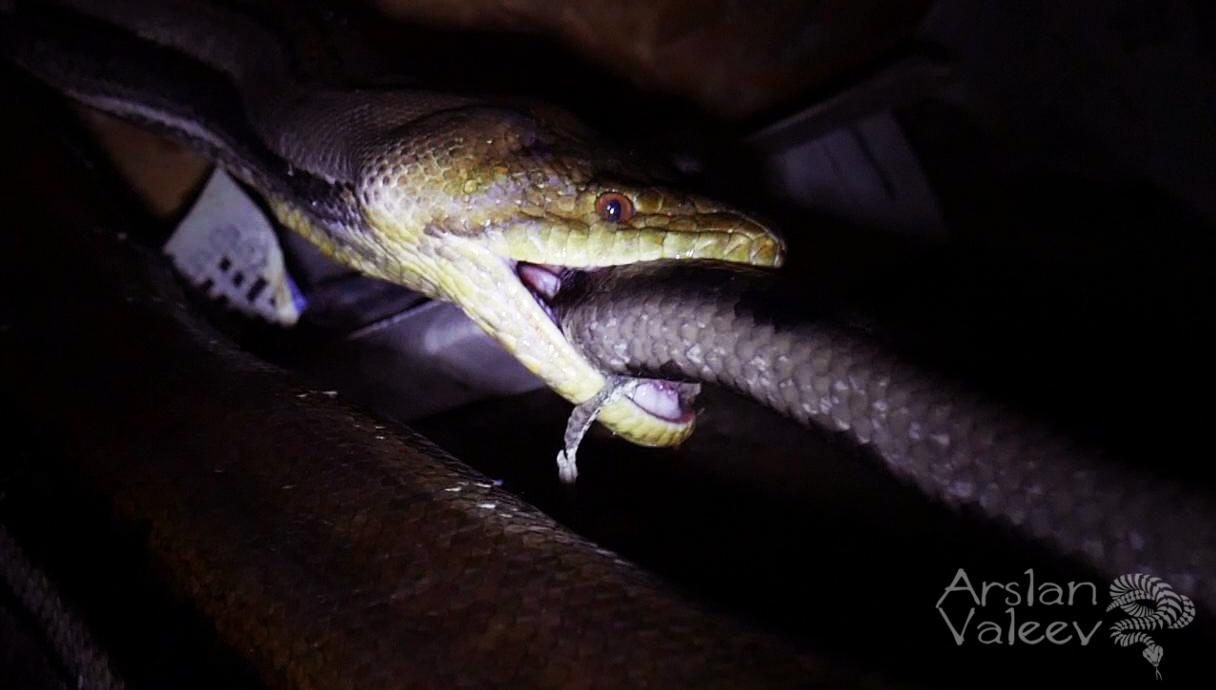 До приезда скорой: что делать, если укусили змея или клещ