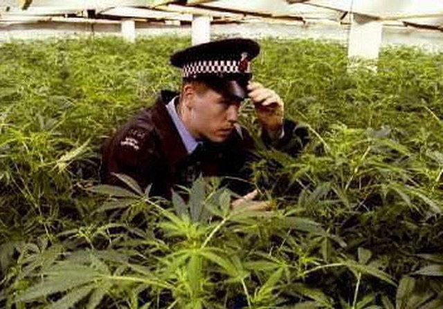 Милиция и марихуана марихуана кокс