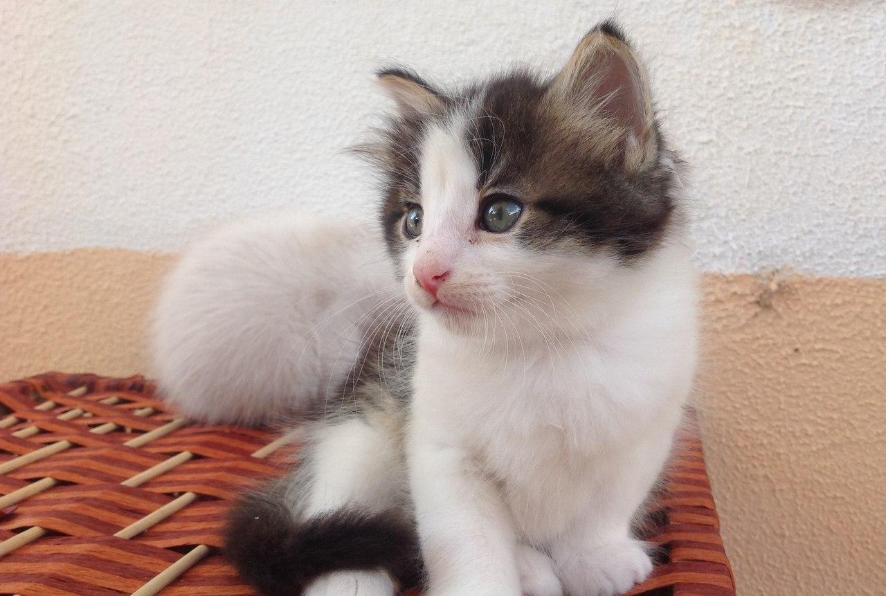 Если взять котенка когда в доме уже есть кот
