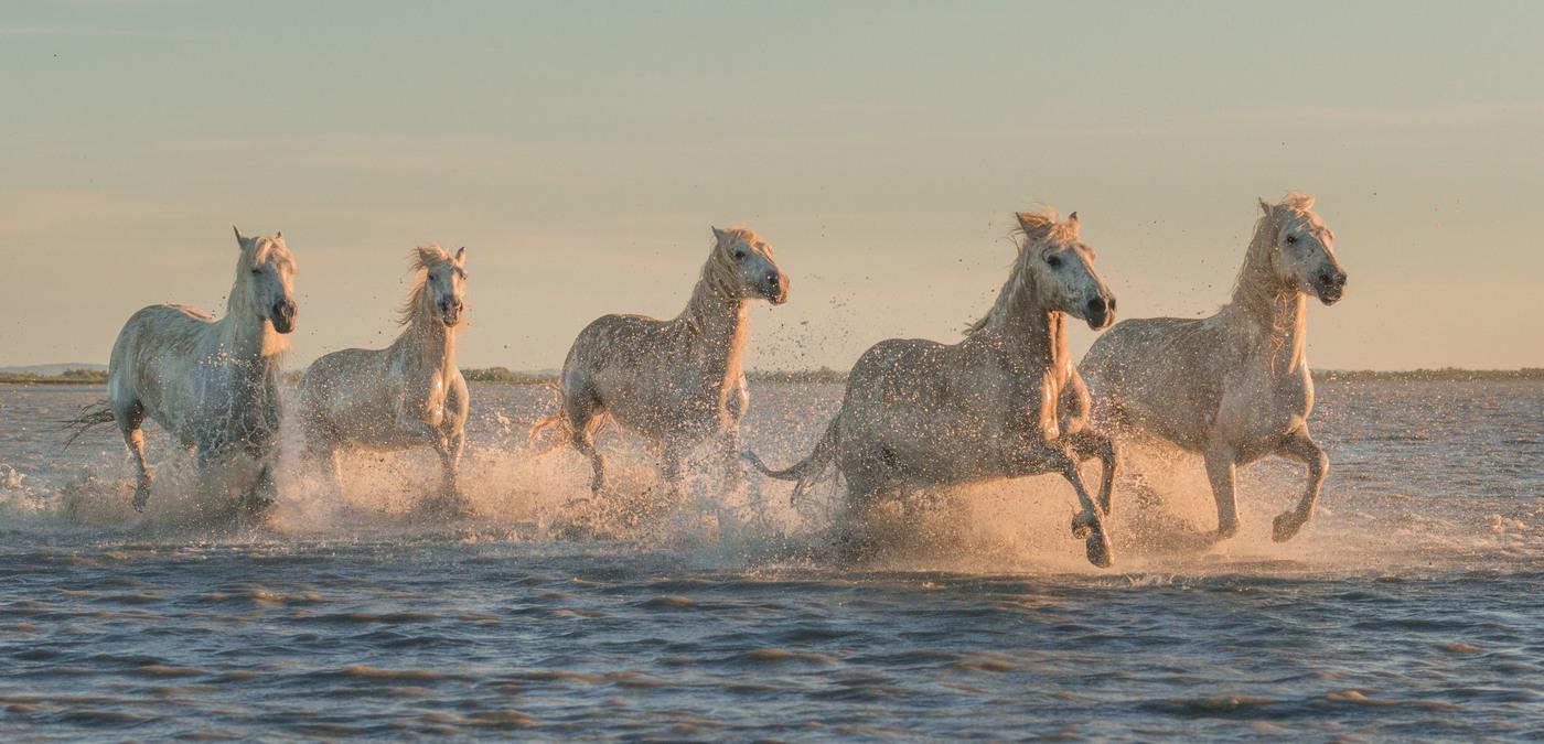 Картинки по запросу двенадцать прекрасных лошадей!