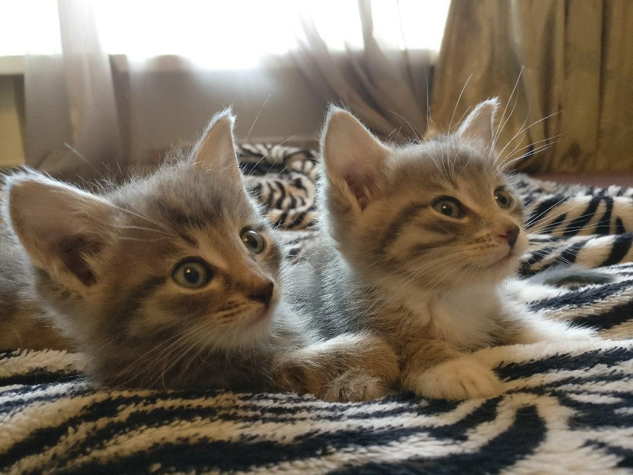 Зверская красота 3: щенята и котята