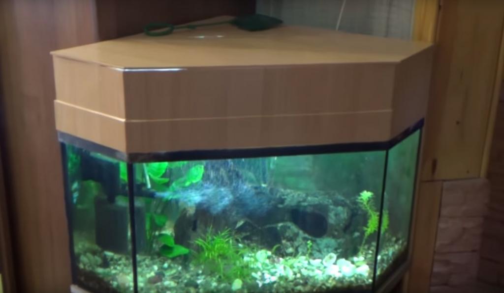 Мутная вода в аквариуме - причина и устранение