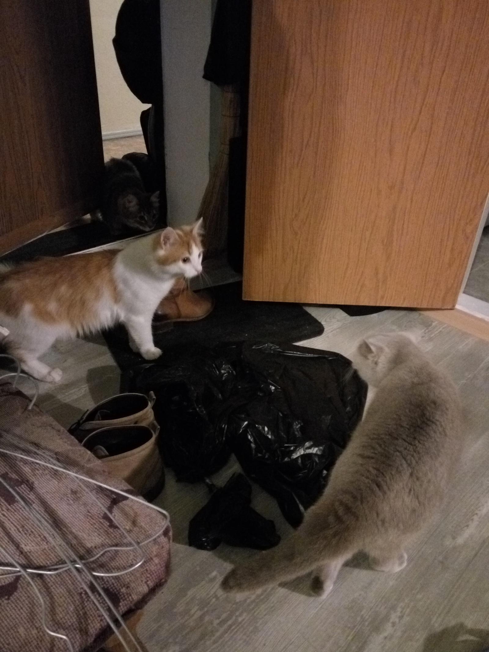Спящий кот в коридоре