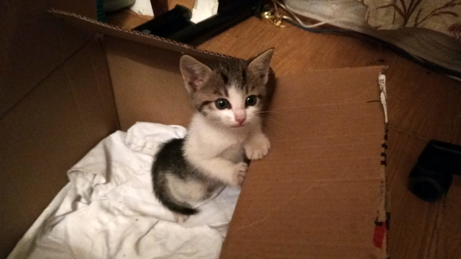 Кота в дар петербург