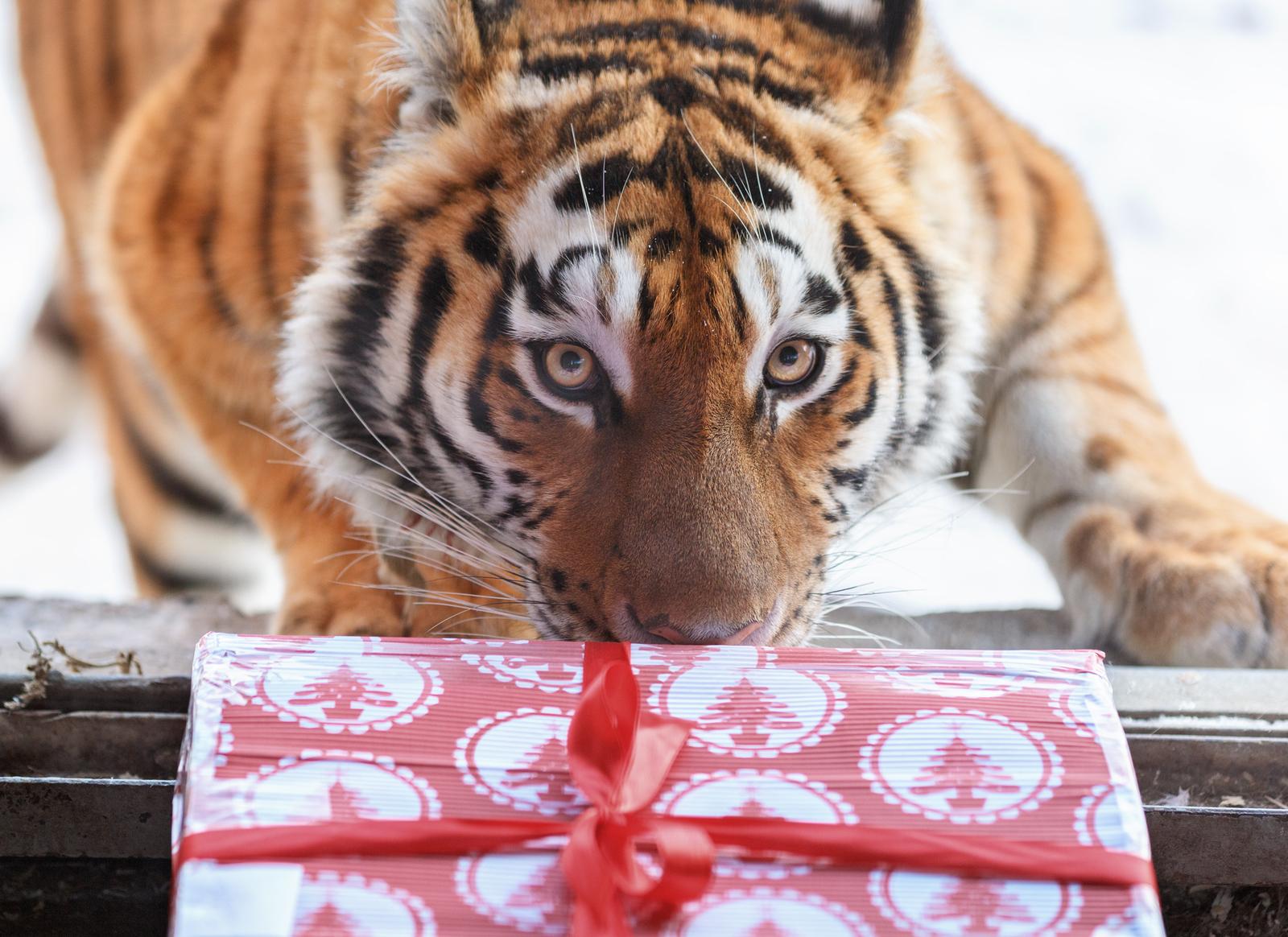 Новогодние подарки к году Тигра