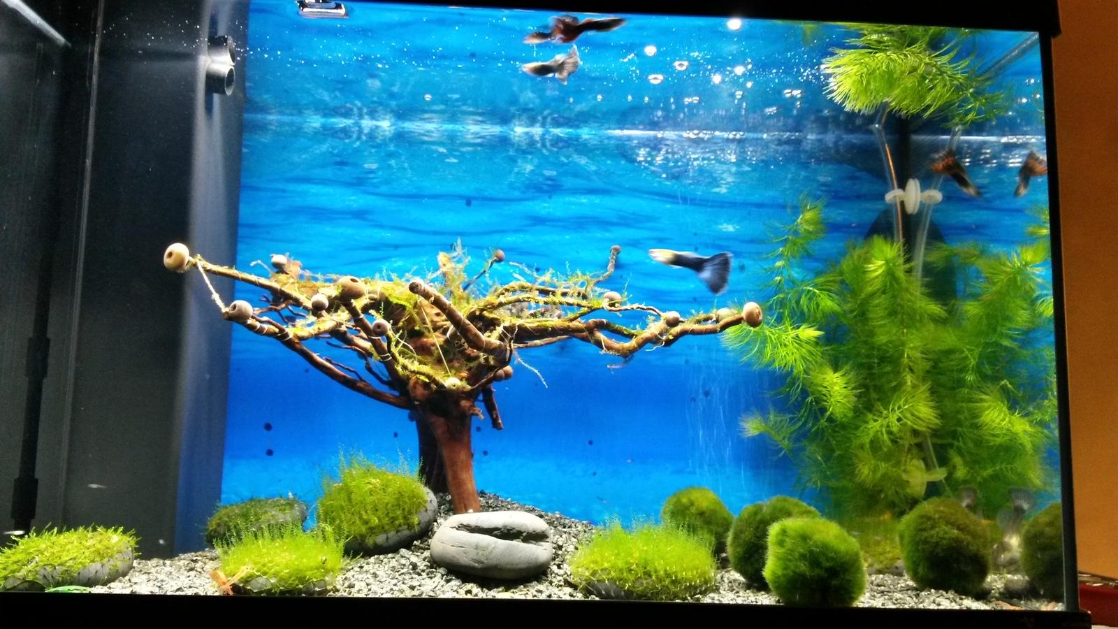Как сделать воду в аквариуме мягче фото 331