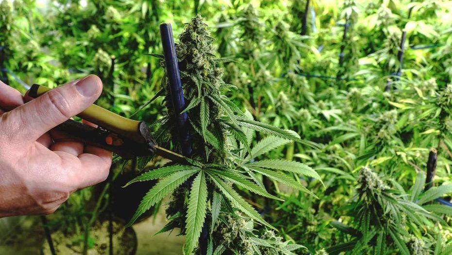 Курили ли древние славяне коноплю депрессии от марихуаны