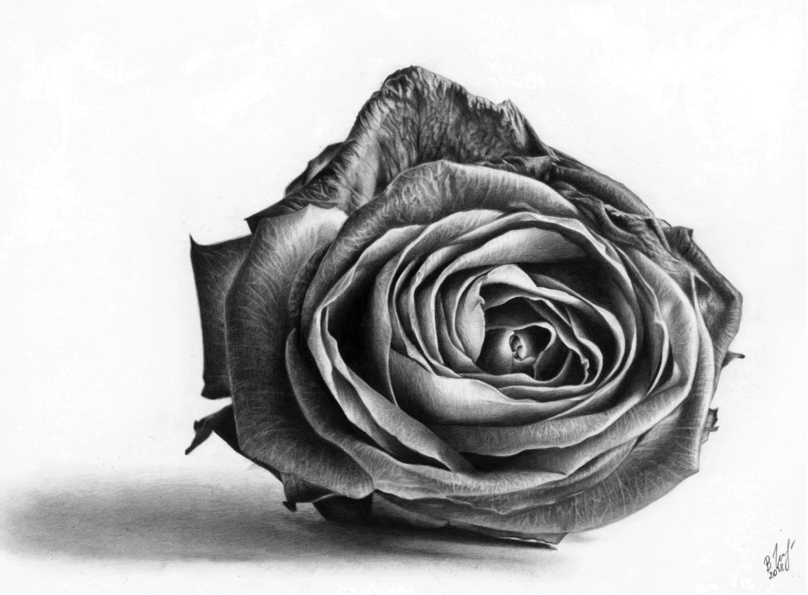 рисунки розы картинки