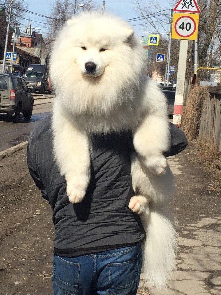 сыроед собака