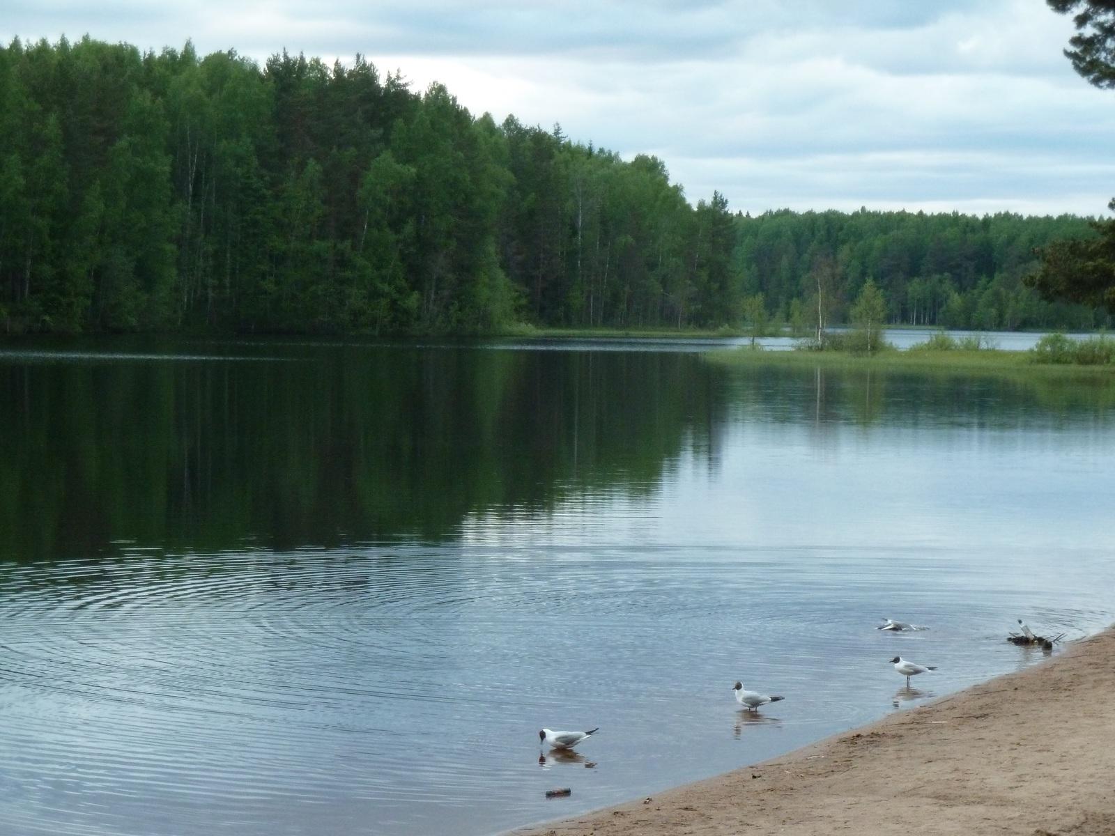 Разврат на озере