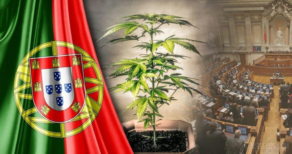 Португалия марихуана кино комедия марихуана