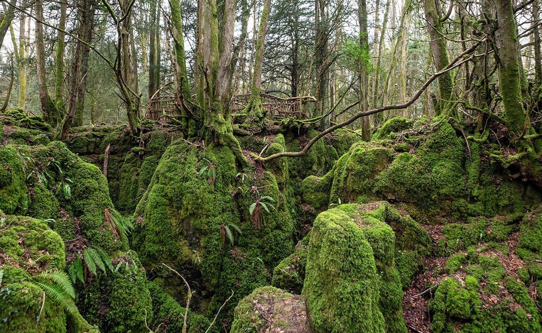 загадочный лес игровые