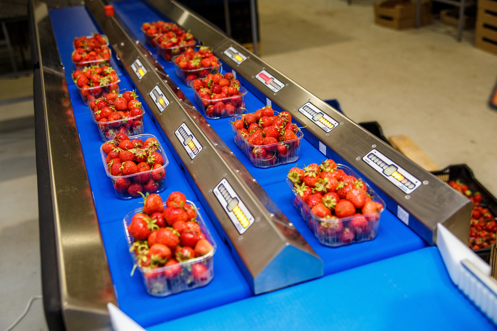 Как выращивают ягоды чтобы, урожай, материал, выращивается, необходимо, голубику, сделано, который, плодоношения, плодоносить, насаждения, можно, ягода, ягоды, вручную, самых, меньше, ягоду, только, лучшие