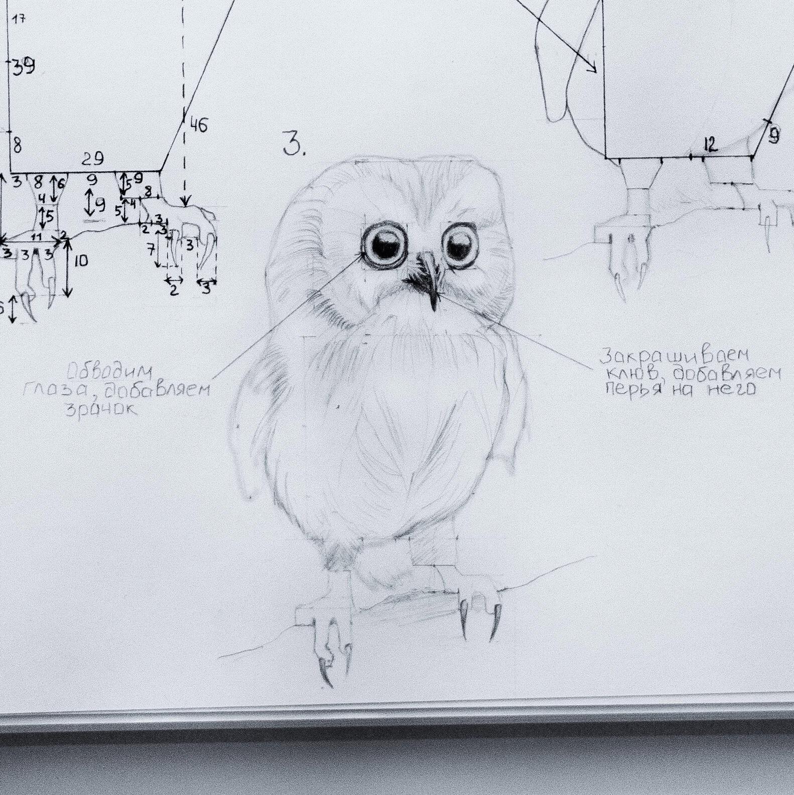 как нарисовать сову в полете - как