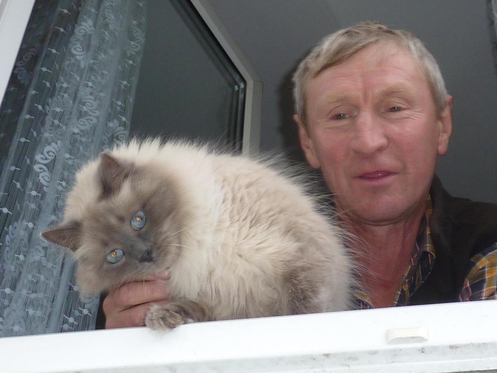 персидская кошка фото игра горячо холодно