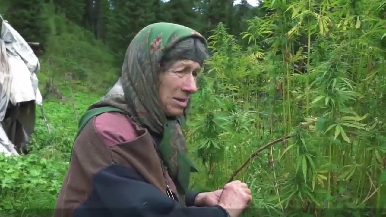 Агапов и конопля портфель с марихуаной купить