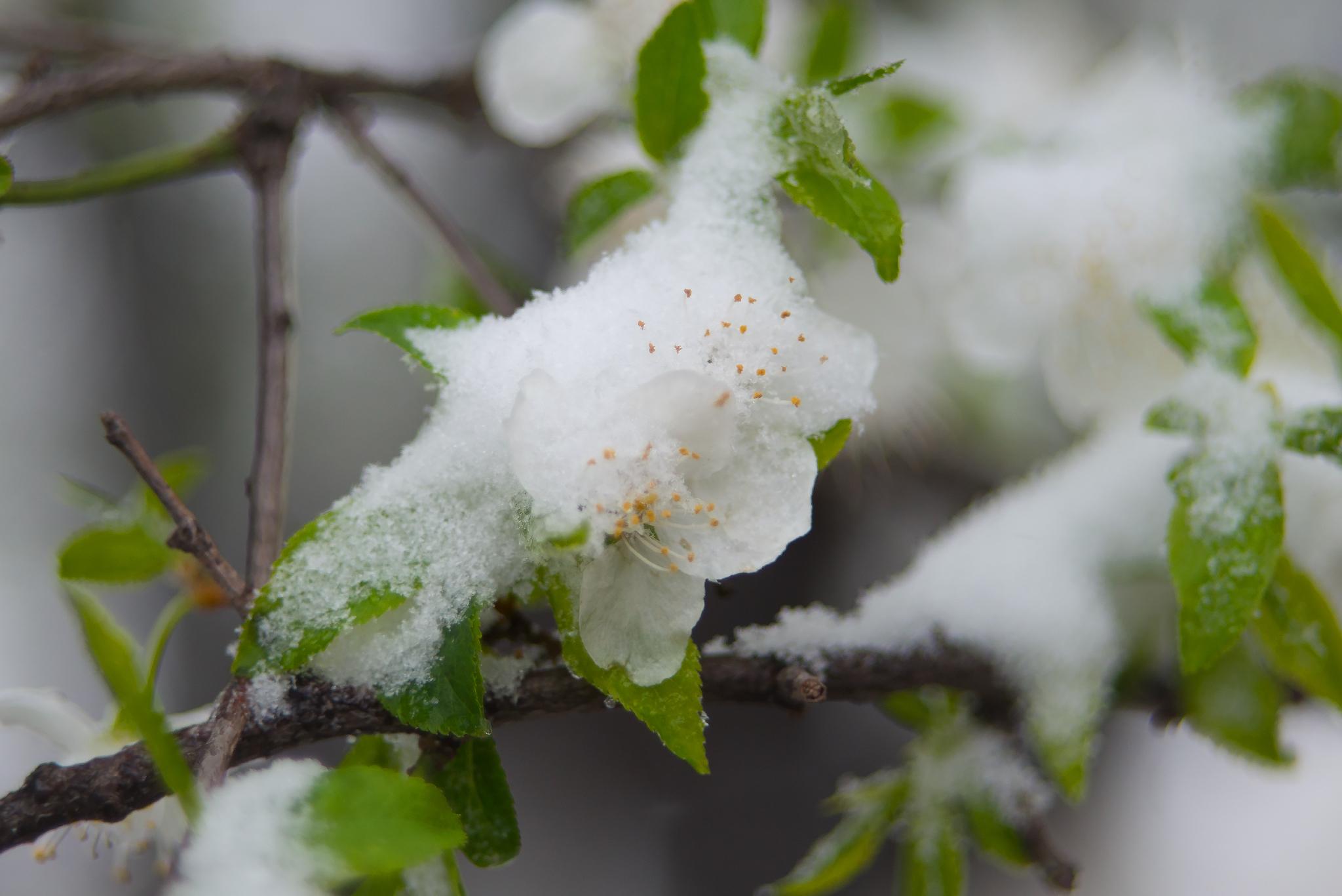 стали картинка апрель снег бонсай изысканная поделка