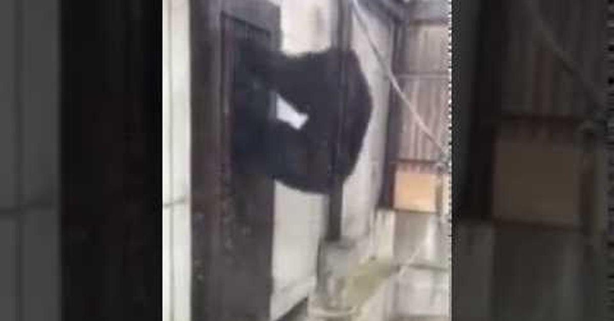 гифка обезьяна стучит в дверь