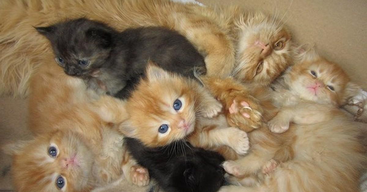 Newborn baby kittens