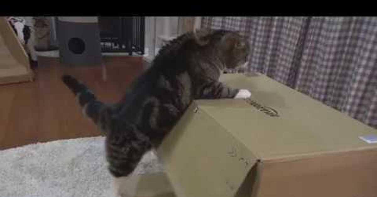 cat acting different