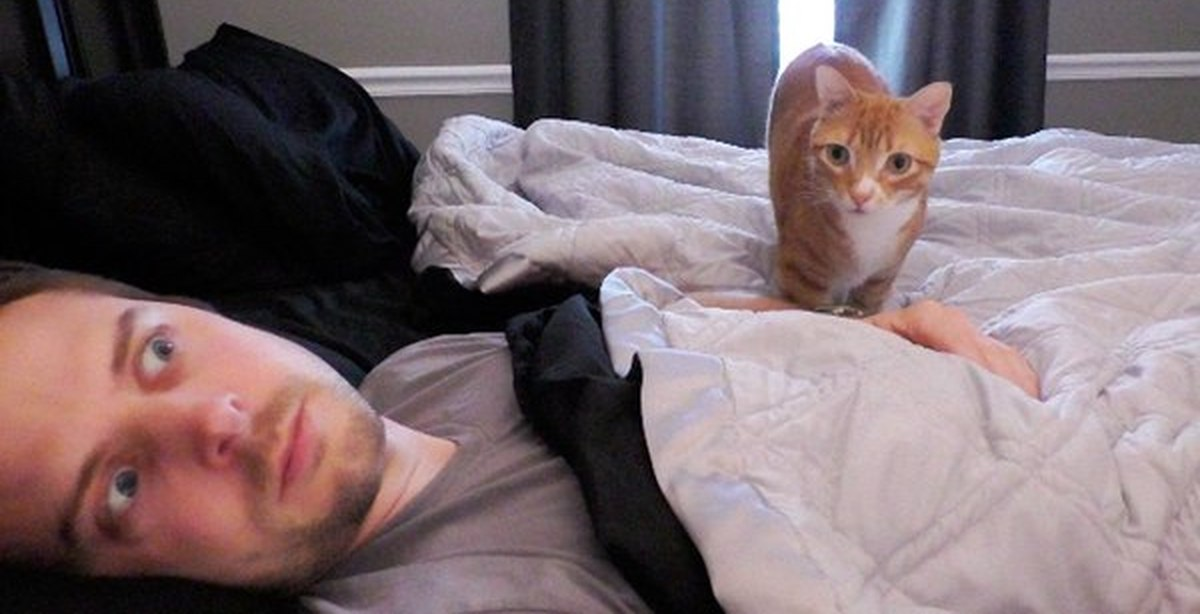 why are cats so weird season
